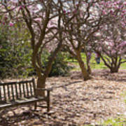 Magnolia Garden 7019 Art Print