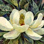 Magnolia Grandiflora Art Print