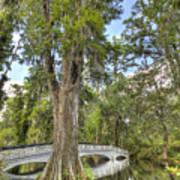 Magnolia Plantation Cypress Tree Art Print
