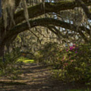 Magnolia Plantation Art Print