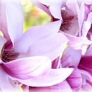 Magnolia Time Art Print