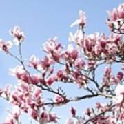 Magnolia Tree Against Blue Sky Art Print