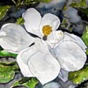 Magnolia Tree Flower Art Print