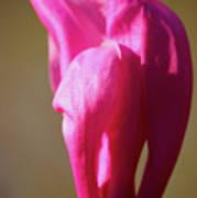 Magnolia's Torch Art Print