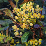 Mahonia Morning  Art Print