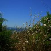 Maidenhair Ferns And Grasses On The Bluff Art Print