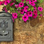 Mailbox With Petunias Art Print