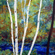 Maine Birch Stream Art Print