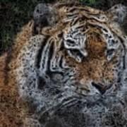 Majestic Bengal Tiger Art Print