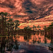 Majestic Cypress Paradise Sunset Art Print