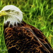 Majestic Eagle Art Print