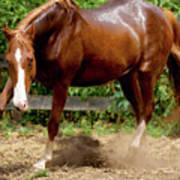 Majestic Horse Art Print