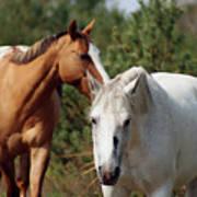 Majestic Horse Ride Art Print