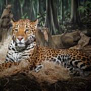 Majestic Leopard Art Print
