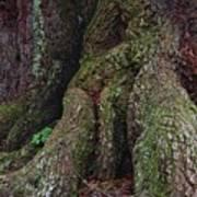 Majestic Tree Trunk Art Print