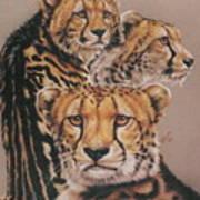 Majestic Vagabond Art Print