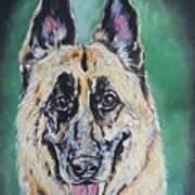 Major, The German Shepherd  Art Print