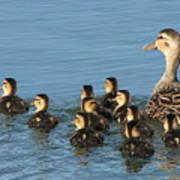 Make Way For Ducklings Art Print
