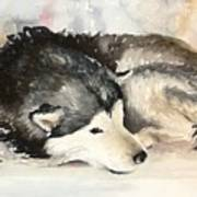 Malamute At Rest Art Print