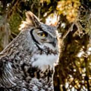 Male Great Horned Owl Portrait Art Print