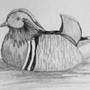 Male Mandrain Duck  Art Print