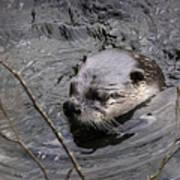 Male River Otter Art Print
