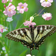 Male Tiger Swallowtail 5416 Art Print