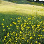 Malibu Creek Wildflowers Art Print