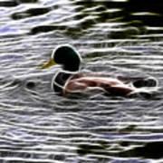 Mallard Duck - Fractal Art Print