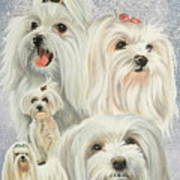 Maltese Collage Art Print