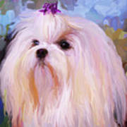 Maltese Portrait - Square Art Print