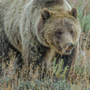 Mama Grizzly Blondie Art Print