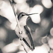 Mama Hummingbird Art Print