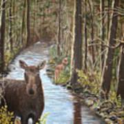 Mama Moose And Calf Art Print