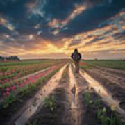 Man Watching Sunrise In Tulip Field Art Print