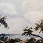 Manatee Skies Art Print