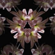 Mandala Amarylis Art Print