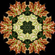 Mandala Autumn Star Art Print