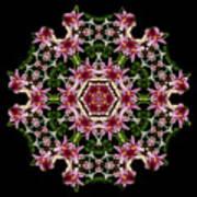 Mandala Monadala  Lisa Art Print