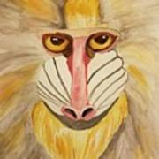 Mandrill Monkey Art Print