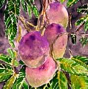Mango Tree Fruit Art Print
