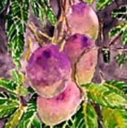 Mango tree fruit Art Print