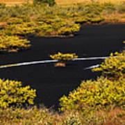 Mangrove River Panoramic Art Print