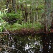 Mangrove     Wild Art Print