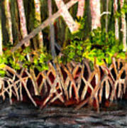 Mangrove At Gumbo Limbo Art Print
