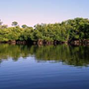 Mangrove Forest Art Print