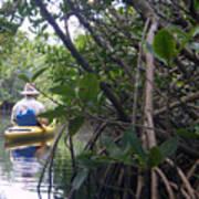 Mangrove Kayaker Print by Steven Scott