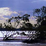 Mangrove Silhouettes Art Print