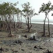 Mangroves Art Print