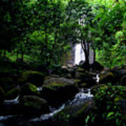 Manoa Falls Stream Art Print
